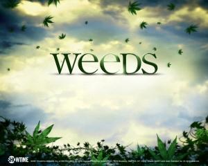 weeds-weeds-108338_1280_1024